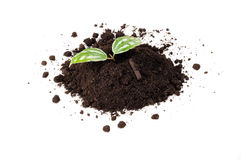 Green Plant in Pile of Soil Royalty Free Stock Photography