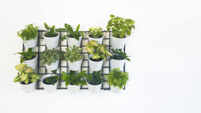 Green plant in planter box hanging on wall. Stock Photos