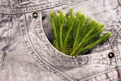 Green plant in pocket Stock Photo
