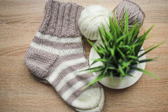 Green plant in the pot, beige and white yarn, Knitted striped beige-beige sock are on the table Royalty Free Stock Photos