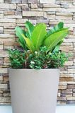 Green plant in pot Royalty Free Stock Photo