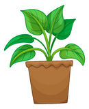 Green plant in the pot. Illustration Royalty Free Stock Photo
