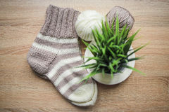Green plant in the pot, knitting needles, beige and white yarn, Knitted striped beige-beige sock are on the table Stock Photo