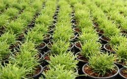 Green plant in a pot nursery Stock Photos