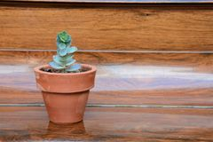 Green plant in a pot stock photography