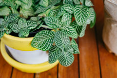 Green plant in pot on the wood table with drink plastic cup Royalty Free Stock Photos