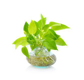 Green plant in Pottery vase Stock Photo