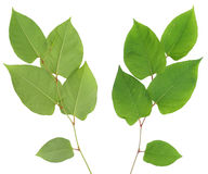 Green plant pro and contra Royalty Free Stock Image