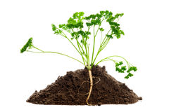 Green plant profile isolated Royalty Free Stock Photo