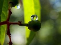 Rain drop. Green plant and rain drop Royalty Free Stock Photography