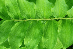 Green plant with rain droplets Stock Image