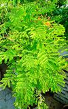 Green plant after rainfall. Green plant after a rainfall in the garden stock photography