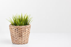 Green plant in a rattan planter Stock Photography