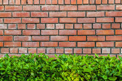Green plant and red brick Stock Image
