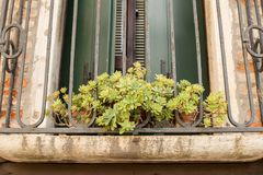 Green plant in red flower pot outside on a windowsill against a. Red brick wall background Royalty Free Stock Image