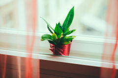 Green plant in a red pot in between window frames Royalty Free Stock Image