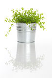 Green plant with reflection Royalty Free Stock Images