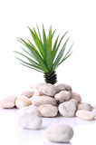 Green plant rising up from heap of white stones Stock Image