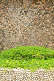 Green plant and rock wall Royalty Free Stock Images