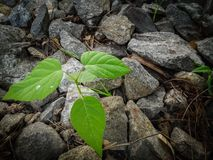Green plant between rocks stock photos