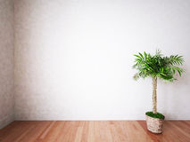 Green plant in the room Stock Image
