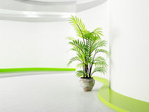 Green plant in the room Stock Images