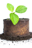 Green plant in rusty cans on white Stock Images