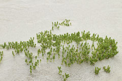 Green plant on sand. Stock Image