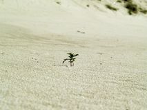 Green plant in the sand Royalty Free Stock Photography