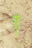 Green plant in sand Stock Photography
