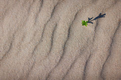 Green plant with shadow on the sea sand Royalty Free Stock Images