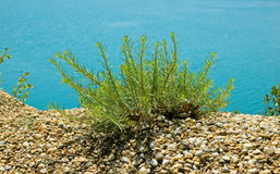 Green Plant on Shore Stock Photos