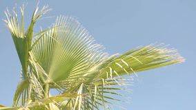 Green plant on sky background. stock footage