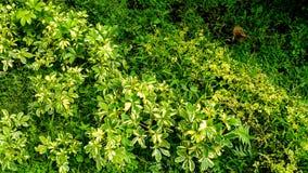 Green plant with small fresh green grass background texture. Pennisetum purpureum. stock photos
