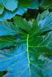 Green Plant - soft focus royalty free stock photography