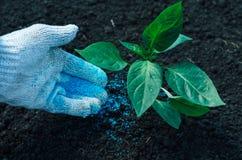 Green plant on soil Royalty Free Stock Photos