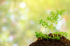Green plant in soil over abstract nature background Stock Photos