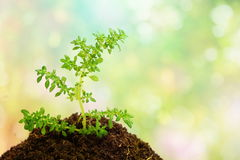 Green plant in soil over abstract nature background Royalty Free Stock Photo
