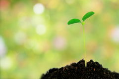 Green plant in soil over abstract nature background Royalty Free Stock Images