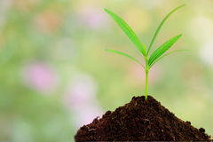 Green plant in soil over abstract nature background Stock Images