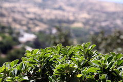 Green plant Stock Image