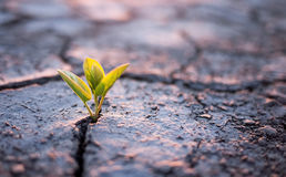 Green plant sprout in desert royalty free stock images