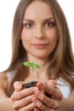 Green plant sprout in female hand Stock Photos