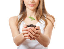 Green plant sprout in female hand Stock Image