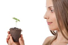 Green plant sprout in female hand Royalty Free Stock Photography