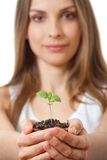 Green plant sprout in female hand Royalty Free Stock Photo