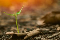 Green plant sprout growing on fertilize soil business growth concept. Green plant sprout growing on fertilize soil in the forest, business startup concept stock photo