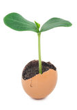 Green plant sprouting from the ground in an eggshell Royalty Free Stock Photo