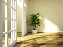 Green plant is standing near the doorway Royalty Free Stock Photos