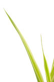 Green plant stems Stock Photography